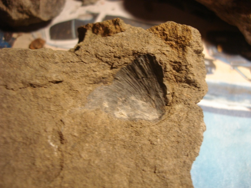 Shell In Rock 2